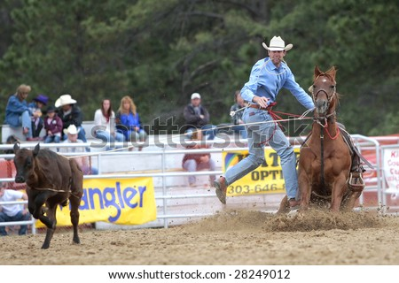 Elizabeth, CO - June 08:  A PRCA Tie Down Roper makes a successful run during the Elizabeth Stampede Rodeo on June 08, 2008.  It is considered one of the best small rodeos in the country. - stock photo