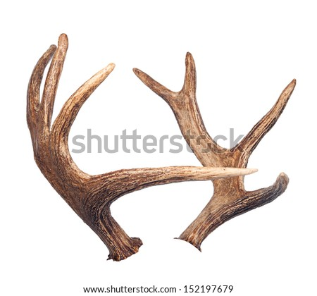 Elk antlers. Isolated on white - stock photo