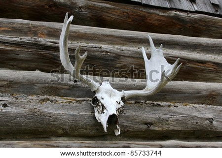 Elk antlers mounted against a log cabin outside wall - stock photo