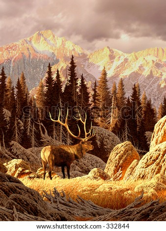 Elk Bull in the Rocky Mountains / AF-021 - stock photo