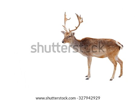 Elk in the woods isolated on white background