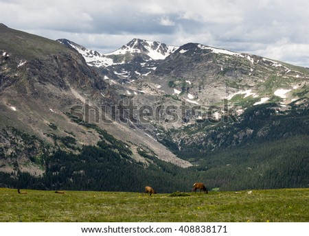 Elks on a green meadow in Rocky Mountain National park, USA - stock photo