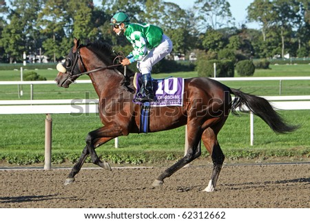 ELMONT, NY - OCT 2: Jockey Cornelio Velazquez lets Winchester burn off some steam in the post parade before the pair win the Joe Hirsch Turf Classic at Belmont Race Track on Oct 2, 2010 in Elmont, NY. - stock photo