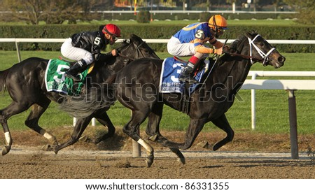 """ELMONT, NY - OCT 8: Jockey John Velazquez guides favorite """"Stopshoppingmaria"""" to a 2nd place finish in The Frizette Stakes at Belmont Park on Oct 8, 2011 in Elmont, NY. - stock photo"""