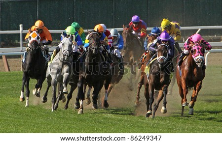 ELMONT, NY - OCT 8: The field takes the far turn in claiming race at Belmont Park on Oct 8, 2011 in Elmont, NY. Eventual winner is Monzante (grey roan on left). - stock photo