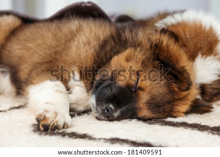 Elo puppy sleeps on a carpet