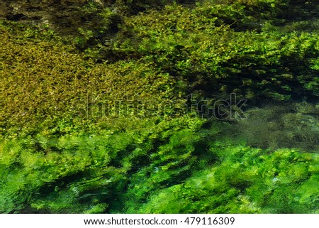Emerald green flowing river water with seaweed, abstract background, river Sourge, Fontaine-de-Vaucluse