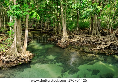 Emerald green water flow through the canal in Krabi,Thailand. - stock photo