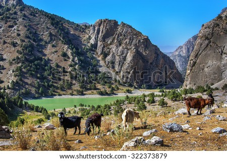 Emerald Lake in the Fan Mountains and mountain goats. Tajikistan