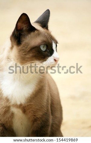 emotion of cat - stock photo