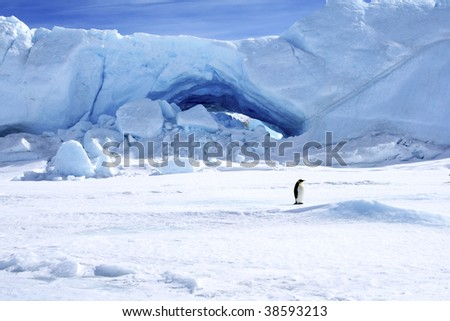 Emperor penguin (Aptenodytes forsteri) standing next to an ice cave on the sea ice of Antarctica - stock photo