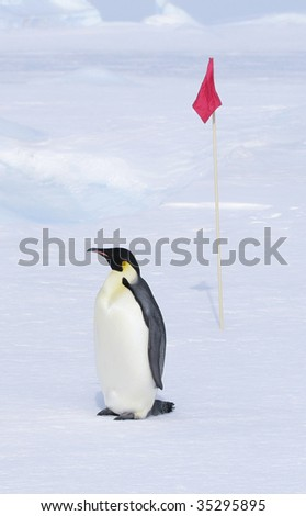 Emperor penguin (Aptenodytes forsteri) standing on the ice in the Weddell Sea, Antarctica - stock photo