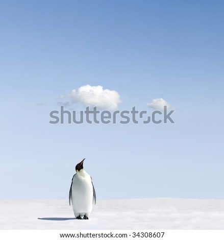 Emperor Penguin checking the weather - stock photo
