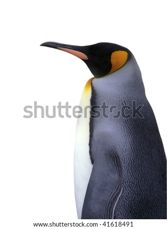 Emperor penguin isolated on white with clipping path - stock photo