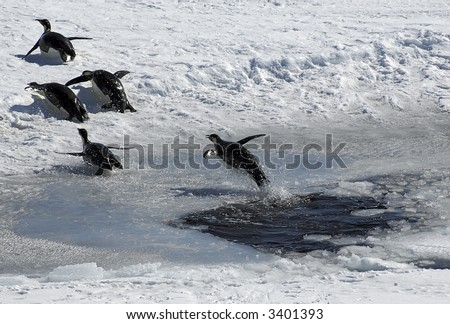 Emperor penguin jumping out of an ice hole and following a group of four penguins. Picture was taken near the tip of the Peninsula during a 3-month Antarctic research expedition. - stock photo