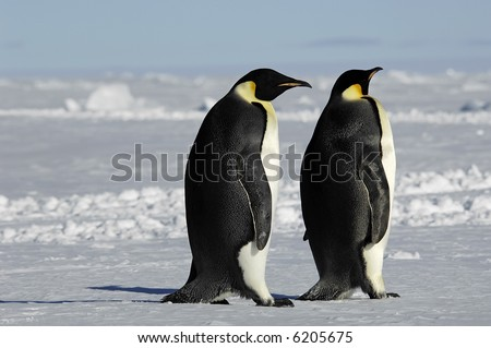 Emperor penguin pair - stock photo