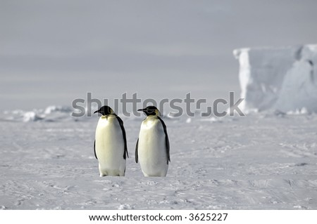 Emperor penguin pair in Antarctica - stock photo