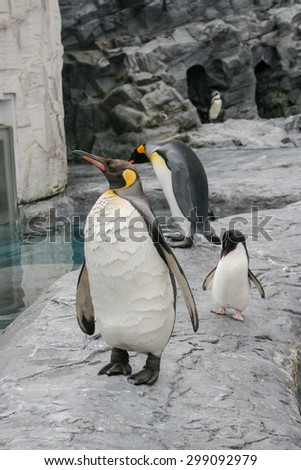 Emperor Penguins - stock photo