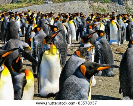 Emperor Penguins - stock photo