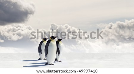 Emperor Penguins in Antarctica - stock photo