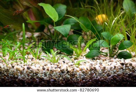 Empty aquarium with plants. No fishes. - stock photo