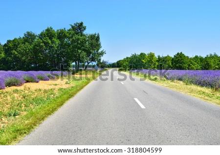 Empty asphalt road along lavender fields. Plateau of Valensole, Provence, France - stock photo