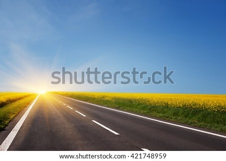 empty asphalt road and floral field of yellow flowers. natural  summer background - stock photo