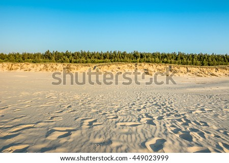 Empty beach with white sand near dune and pine forest, summer landscape over sea in Poland