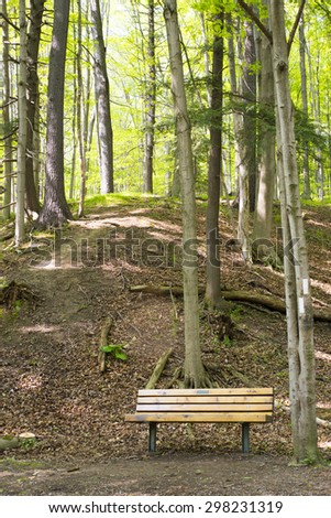 Empty bench on a forest trail, taken at Dundas conservation area, Ontario, Canada. - stock photo