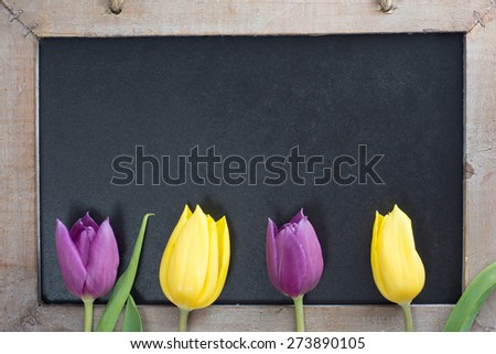 empty blackboard with wooden frame with tulips / Tulips - stock photo