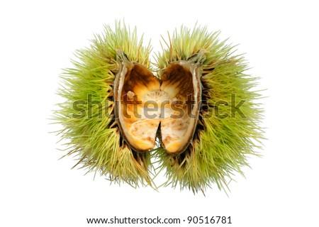 empty chestnut fruit husk isolated on white background - stock photo
