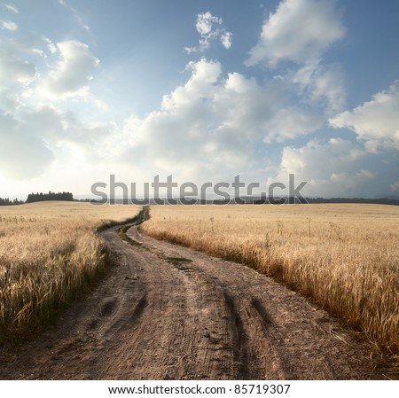 Empty countryside road through fields with wheat - stock photo
