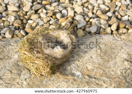 Empty, deserted birds nest resting on limestone rock next to pebbles. Single dead, decaying chick inside. - stock photo