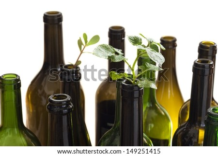 Empty glass bottles with plant - stock photo