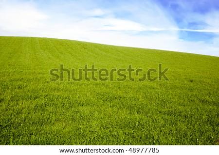 empty grass field under blue sky - stock photo