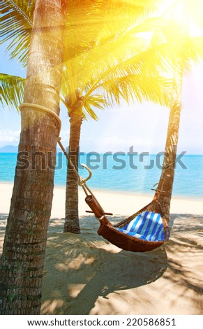 Empty hammock between palms trees at sandy beach - stock photo