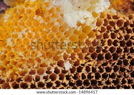 empty honeycomb - stock photo