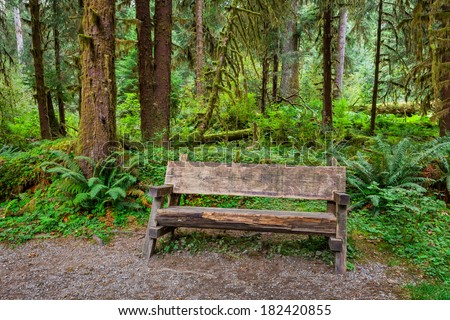 Empty log bench in the forest  in  Olympic National Park, Washington. Stock photo of a rustic log bench in the forest in the Hoh Rainforest. - stock photo
