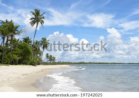 Empty palm fringed tropical beach on the northeast coast of Brazil