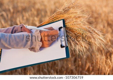 Empty paperwork, pen and golden ears wheat in women's hands against a background of wheat field in sunlight - stock photo