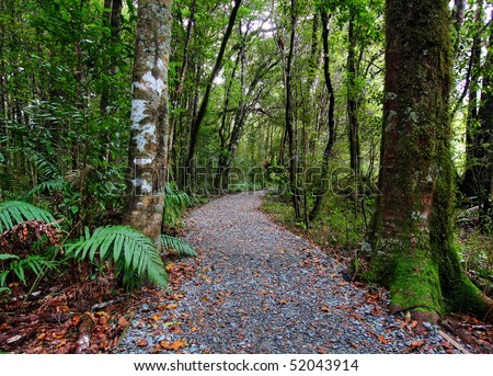 Empty Path through the tropical forest - stock photo