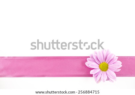 Empty postcard background with oxeye daisy flower and pink ribbon - stock photo