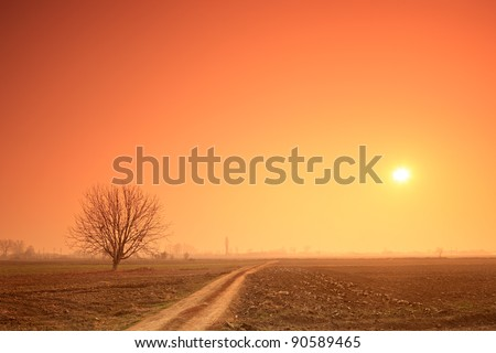 Empty road, a tree and the sun at sunset - stock photo