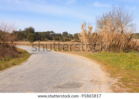 Empty road against trees and blue sky - stock photo