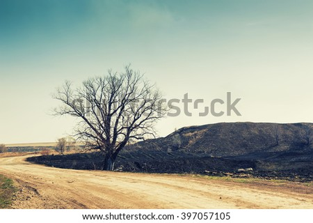 Empty road and a dry tree in the hills - stock photo