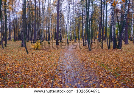 Empty road in autumn park.Fall foliage.Moscow region,Russia.Cloudy rainy day.