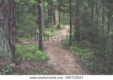 empty road in the forest with shadows and green foliage - retro vintage film look