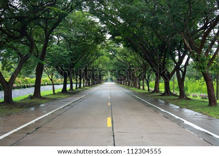 empty road with tree on both side - stock photo