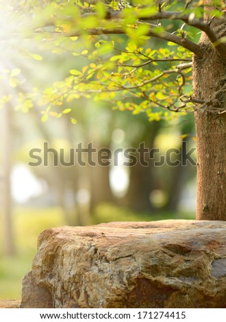 empty stone table with leaves in background - stock photo