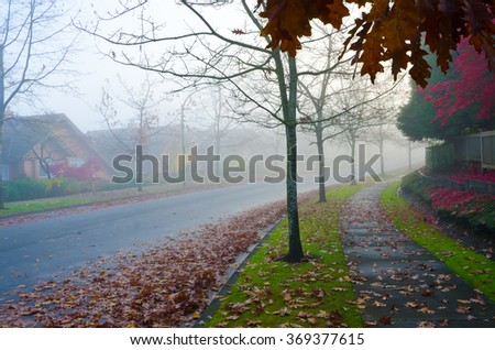Empty street at the beautiful silent foggy morning, day.